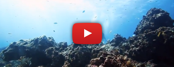 Restauración de Corales